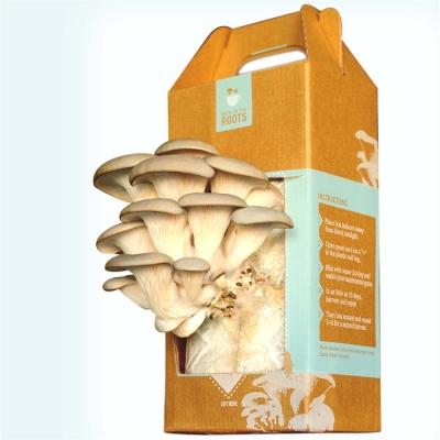 mushroom_kit_400_400