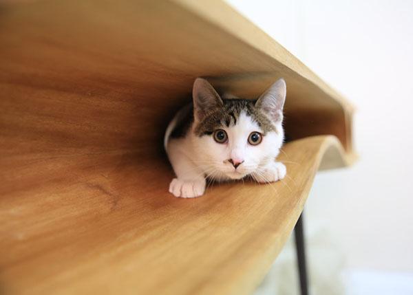 i gatti e il design: un amore a prima vista