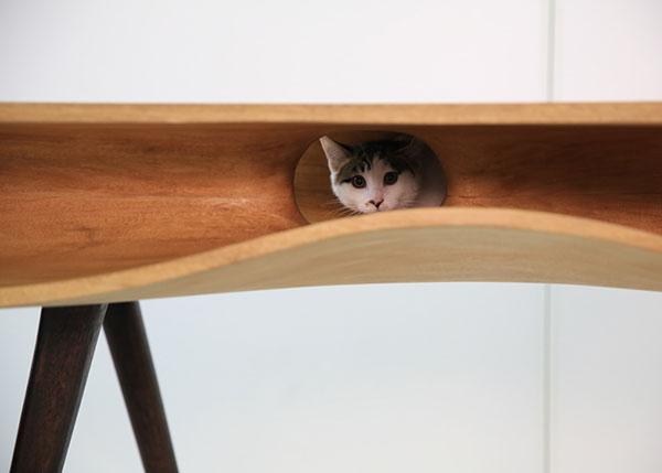 I gatti e il design: il progetto di Hao Ruan