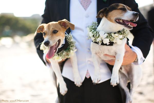Wedding dog sitter in Italia