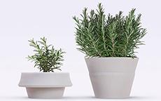 Un vaso che cresce con le piante