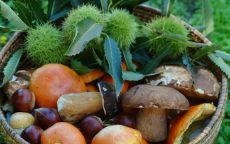 Come riconoscere i funghi commestibili