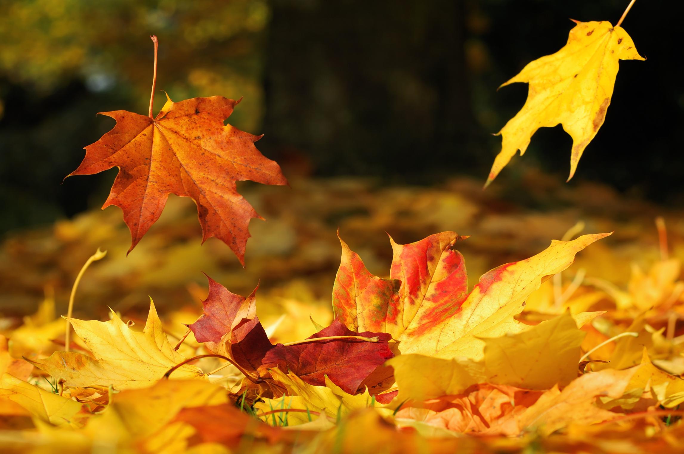 Decorazioni autunnali con le foglie