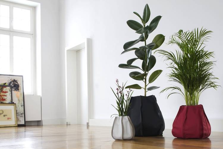 Piante da interno come sceglierle e prendersene cura for Vasi grandi per interni