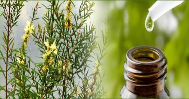 Come usare l'olio di tea tree