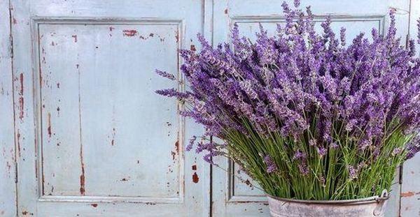 Piante aromatiche d 39 arredo per colorare e profumare la casa - Profumare la casa con l ammorbidente ...