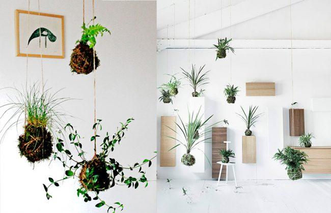 Piante sospese ecco i vasi da appendere al soffitto - Piante da parete ...